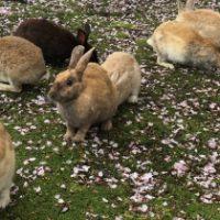 ウサギが大量に生息する島と闇