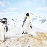 南極は、世界最大級の砂漠である