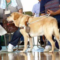 盲導犬の指示語の公用語は英語
