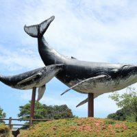 クジラは歌を唄う