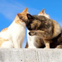 ネコは本当に顔を洗っているの?