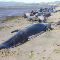 クジラは陸に上がるとなぜ死んでしまう?