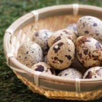 ウズラの卵の模様は毎回同じ柄