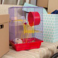 「ゆうパック」で小動物を送ることができる