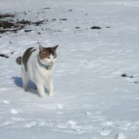 南極物語には「タロ」と「ジロ」の他に「タケシ」もいた