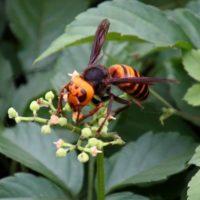 スズメバチと鳥のスズメの関係性