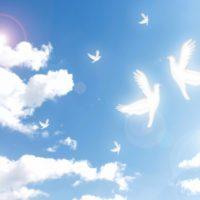どうしてハトが平和の象徴になった?