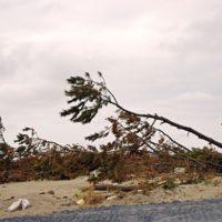 台風にはどうやって名前が付けられている?