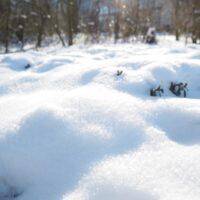 世界一の積雪量を誇るのはどこの国?