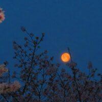 各月にあらわれる満月にはそれぞれ名前が付いている