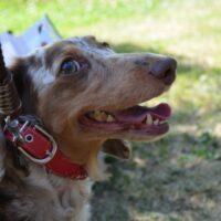犬のヨダレは病気のサインかも知れない